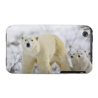 Wapusk National Park, Canada. Case-Mate iPhone 3 Cases