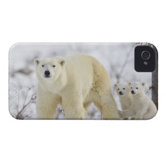 Wapusk National Park, Canada. iPhone 4 Case