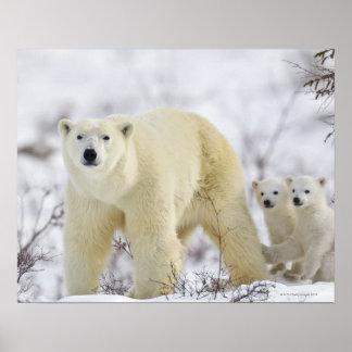Wapusk National Park, Canada. Poster