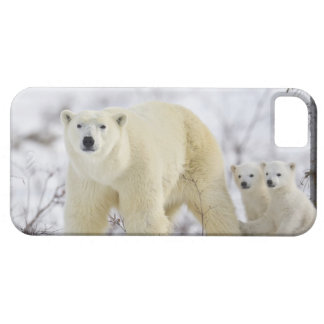 Wapusk Nationalpark, Kanada iPhone SE/5/5s Case