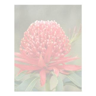 Waratah en la floración, flores de Australia Plantillas De Membrete