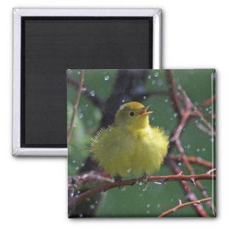 Warbler 2 Inch Square Magnet