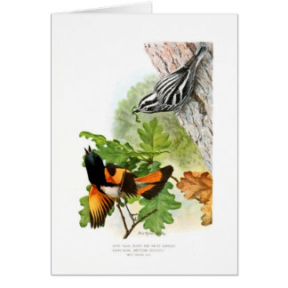Warbler and Redstart Greeting Card