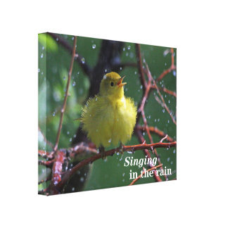 Warbler Gallery Wrapped Canvas