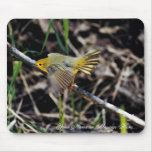 Warbler on Branch Mousepad
