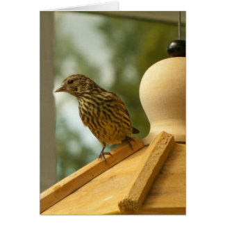 Warbler on the Lookout Card