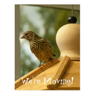 Warbler on the Lookout; Change of Address Postcard