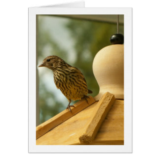 Warbler on the Lookout; Customizable Card