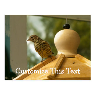 Warbler on the Lookout; Customizable Postcard