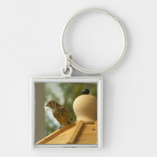 Warbler on the Lookout Keychain