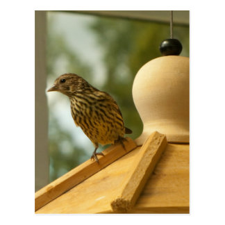 Warbler on the Lookout Postcard