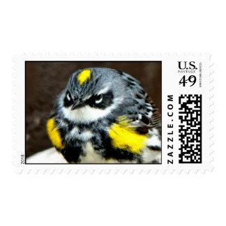 Warbler Postage