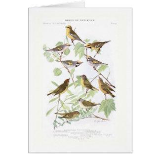 Warblers Greeting Cards