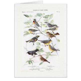Warblers Greeting Card