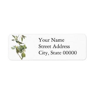 Warbling Vireo, John Audubon Custom Return Address Labels