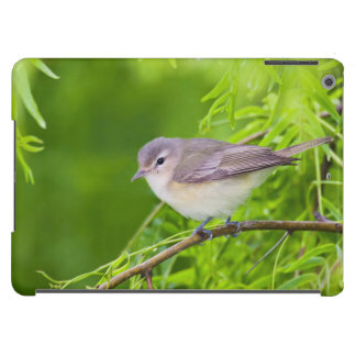 Warbling Vireo (Vireo Gilvus) Foraging Cover For iPad Air