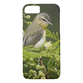 Warbling Vireo (Vireo gilvus) foraging on South iPhone 7 Case