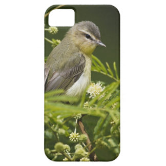Warbling Vireo (Vireo gilvus) foraging on South iPhone SE/5/5s Case