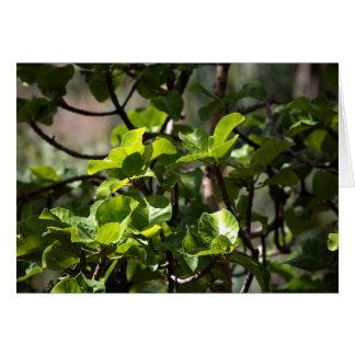 Warka Tree (Ficus vasta) Greeting Card