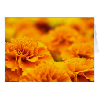 Warm and Bright Marigolds Greeting Card