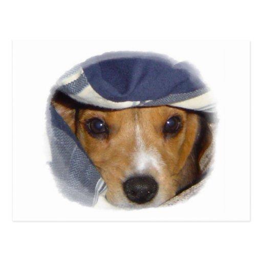 Warm beagle postcard