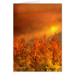 Warm Fall Day Thanksgiving Card Cards
