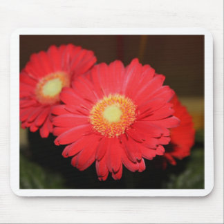 Warm Gerber Daisy Mouse Pads