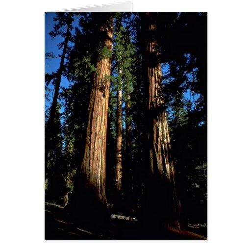 Warm redwoods card