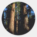 Warm redwoods classic round sticker