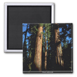 Warm redwoods 2 inch square magnet
