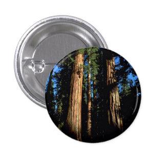 Warm redwoods pinback button
