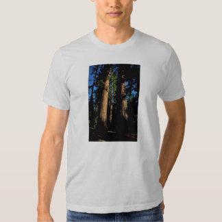Warm redwoods T-Shirt