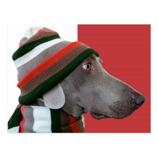 Warm Weimaraner Dog Postcard