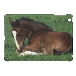 Warmblood Foal Laying Down Cover For The iPad Mini