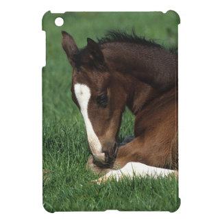 Warmblood Foal Laying Down iPad Mini Case