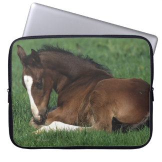 Warmblood Foal Laying Down Laptop Sleeve