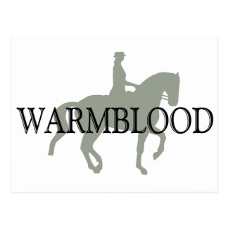 WARMBLOOD with Dressage Horse Rider Post Cards