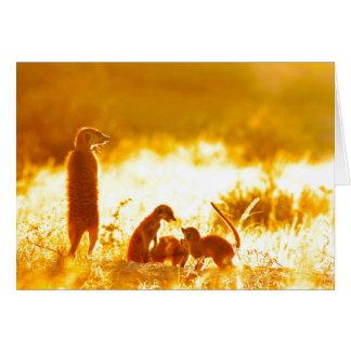 Warmth - Seasons Greetings Card