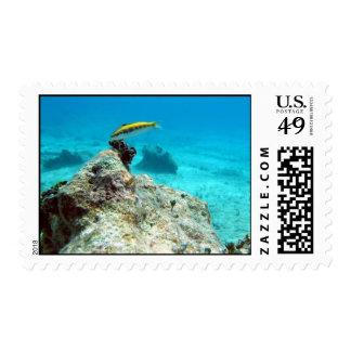 Warsse Deep In The Seas Stamps