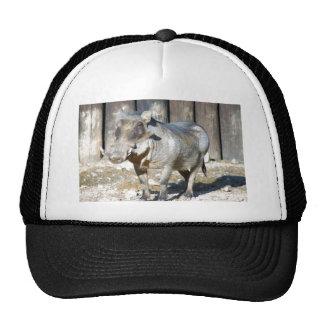 wart hog4x6 trucker hat