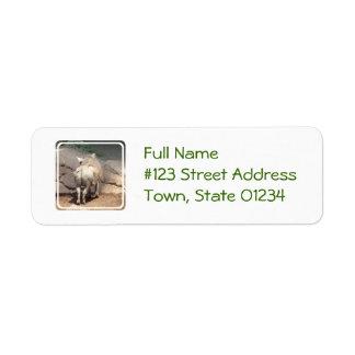 Warthog Behind Return Address Label