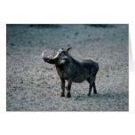 Warthog - Big Boar Card