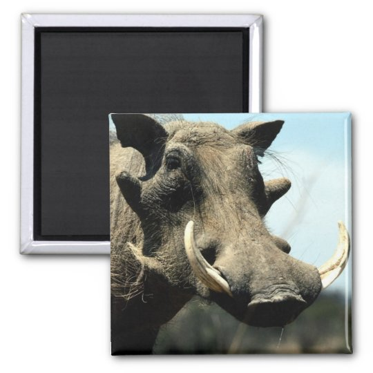 Warthog Close-Up Magnet
