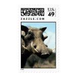 Warthog Close-Up Stamps