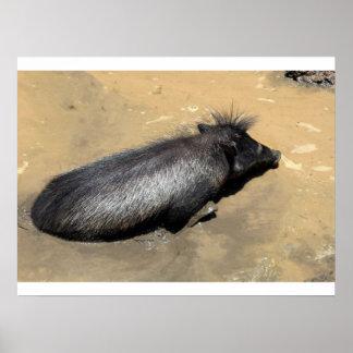 Warthog en fango póster
