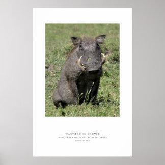 Warthog en trébol póster