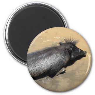 Warthog in mud magnets