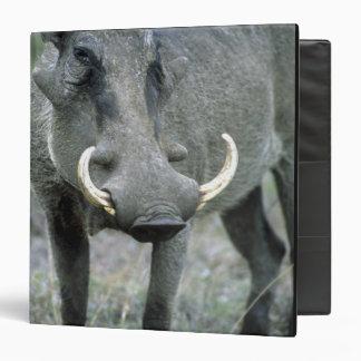 Warthog Phacochoerus africanus) Masai Mara Binder