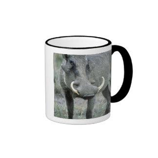 Warthog Phacochoerus africanus) Masai Mara Ringer Coffee Mug