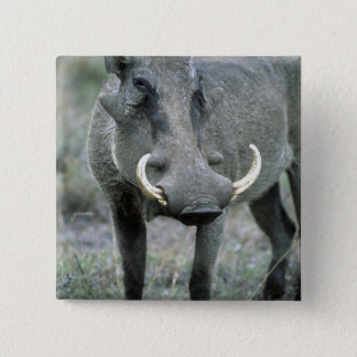 Warthog Phacochoerus africanus) Masai Mara Pinback Button